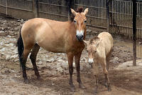 今年生まれた2頭の仔馬 - 動物園放浪記