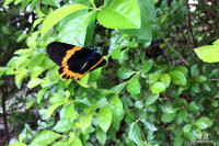 591 Haifeng ~中国で蝶をみつけたと思ったら~ - 眼遊記