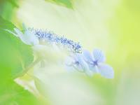 ファンタジックな花の撮り方 - スポック艦長のPhoto Diary