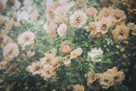 full bloom - IL EST TROP TARD     時は過ぎゆく ...