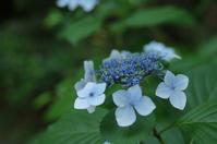 紫陽花と庭 - Invention memo
