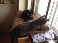 ロンとチャミは夜型になりました - 猫と自然と散歩の日々