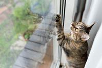 カーテンの裏で - 猫と夕焼け