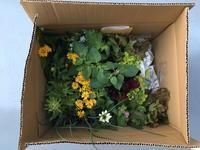 新しいお花と野菜 - Tokyo vu par ...