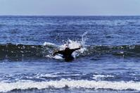 surfer - The collection of photograph