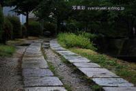 哲学の道に行く9 - 写楽彩