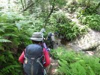 今日のお気に入り写真金勝(こんぜ)アルプスに登る - 風の便り