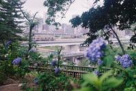 Snap No195 - MASIなPhoto Life
