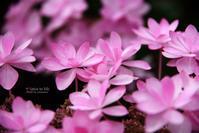 Cute hydrangea - + Spice to life
