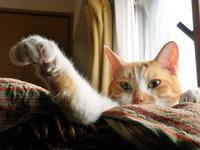 猫の手を借りる - ぎんネコ☆はうす