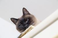 家猫の食事情 - おまけ猫たちとの日常