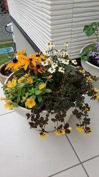 花と色と心理 - 小野田産業の日記