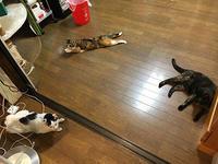 お客さんでいっぱい - ぶつぶつ独り言2(うちの猫ら2018)