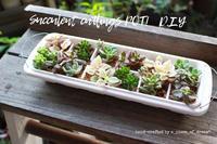 簡単DIY!vol.9「100円製氷ケース」で多肉ポット作り方 - a piece of dream* 植物とDIYと。