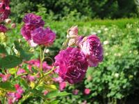バラの季節のナイマンズ 2 -  Der Liebling ~蚤の市フリークの雑貨手帖2冊目~