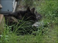 ボボとその仔猫たち_VI - L'Ambiance du Midi