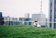 Snap No196 - MASIなPhoto Life