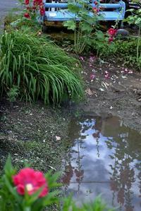 梅雨の晴れ間 - 赤煉瓦洋館の雅茶子