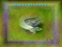 『逝く時も七癖在りや蛇の衣』物真似575夏qt2603 - 老仁のハッピーライフ