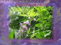 『空梅雨の狭庭に藤の返り花』つれづれ575qt2606 - 老仁のハッピーライフ