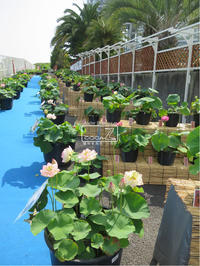 植物的生活820 - Atelier Botanique COCA-Z