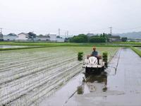 七城米長尾農園平成29年度の田植えを現地取材 - FLCパートナーズストア