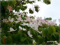 大通公園のお花 - はあと・ドキドキ・らいふ