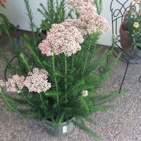 新しい花見つけた - お転婆シニアのガーデニング、旅、ロードバイク、たまの料理