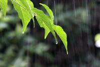 やっと梅雨らしく - 丹馬のきょうの1枚