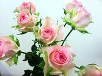 切花 - 大阪府茨木市の花屋フラワーショップ花ごころ yomeのブロブ