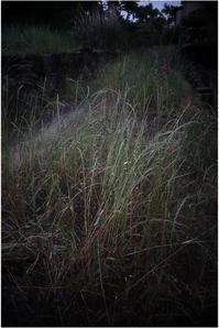 1823 名玉極楽(2017年6月1日ズマロン35㎜F2.4で奈良公園散策) 1 - レンズ千夜一夜