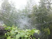 雨上がりの庭、鑑賞会 - アオモジノキモチ