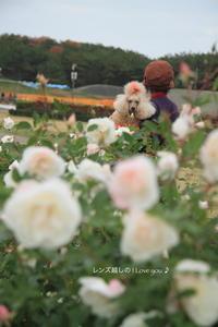 薔薇と言えば・・・♪ - 君の瞳に恋してる♪