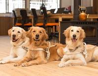 お仕事で盲導犬施設の撮影を・・ - いとしい犬たちのフォトブログ