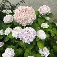 7月 - blog   KOTIST YOKO