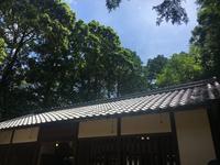阿部八幡神社で伐採…樫の木が5本くらい切られてしまう - 奈良・桜井の歴史と社会