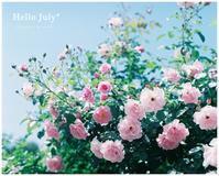 Hello July* - ココロハレ*