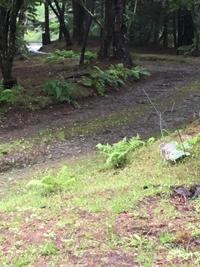 軽井沢は豪雨警報発令中 - 日々の暮らし