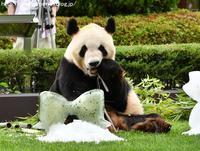 2017年6月白浜パンダ見隊2その5 - ハープの徒然草