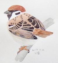 #ネイチャー・スケッチ #Naturejournal 『雀』 Passer montanus - スケッチ感察ノート (Nature journal)