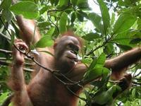 ボルネオ島のBIG6野生動物・見るべき野生動物 - コタキナバル 旅行記・ブログ