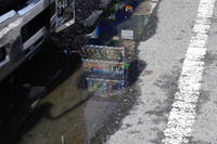 雨上がり - day pHoto