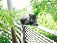 梅雨の空と、猫たちと。 - Healing Garden  ー草庭ー