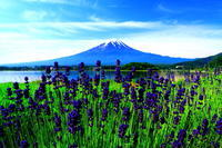 29年6月の富士(29)大石公園の富士 - 富士への散歩道 ~撮影記~