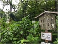 鎌倉に紫陽花を - From sugar box studio