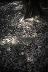 1825 名玉極楽(2017年6月1日ズマロン35㎜F2.4で奈良公園散策)3 - レンズ千夜一夜