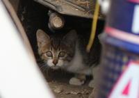 柏の外れの野良猫ロック問題'17 - vespa専門店 K.B.SCOOTERS ベスパの修理やらパーツやらツーリングやらあれやこれやと