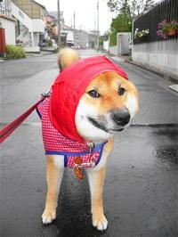 雨の日は赤ずきんちゃん - 写心食堂