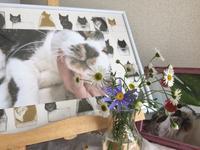 みーちゃんの旅立ちから1年 - がんばる猫