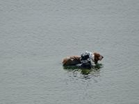 初泳ぎ - 湖畔に暮らすミュージシャンと愛犬ハンク/ターシャの日記